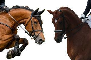 Zowel spring- als dressuurpaarden kunnen spierverzuring hebben
