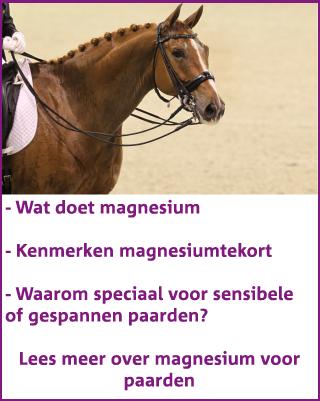 Magnesium voor paarden