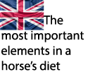 Most important element horse's diet