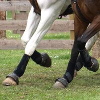 Peesblessure bij je paard