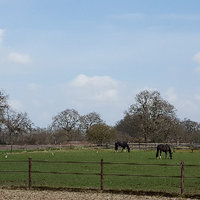 Belangrijke elementen in het paardenrantsoen