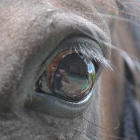Nerveus en gespannen paard
