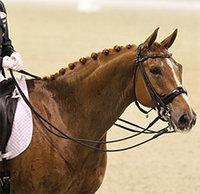 Stress bij je paard