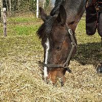 Overgang van weide naar stal