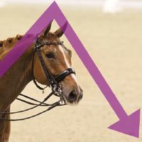 Paarden met energietekort